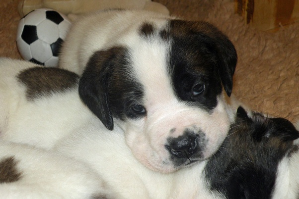 Puppy from the Barry Foundation